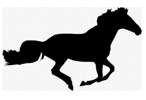 【無敗の三冠馬伝説】ディープインパクトが与えた9つの衝撃